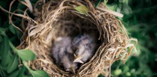 birds on a nest