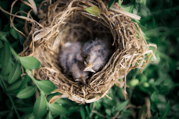 Best ways to stop Birds Nesting In My Roof