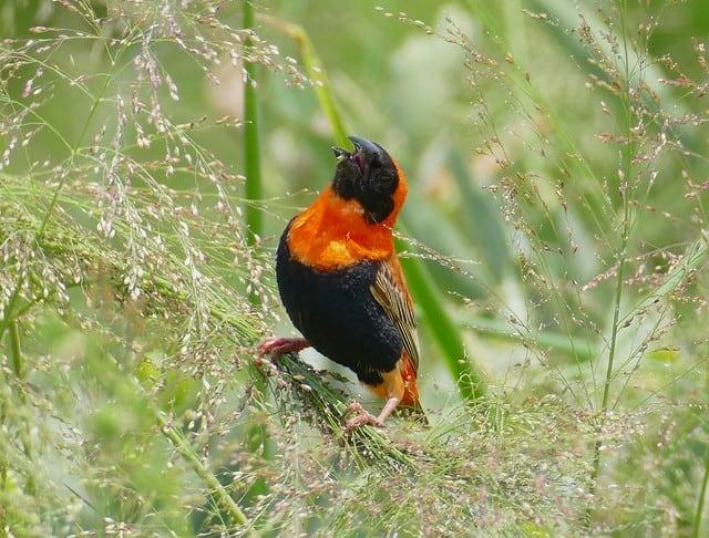 bird on top of grass