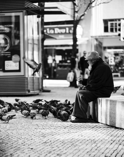 man watching pigeons