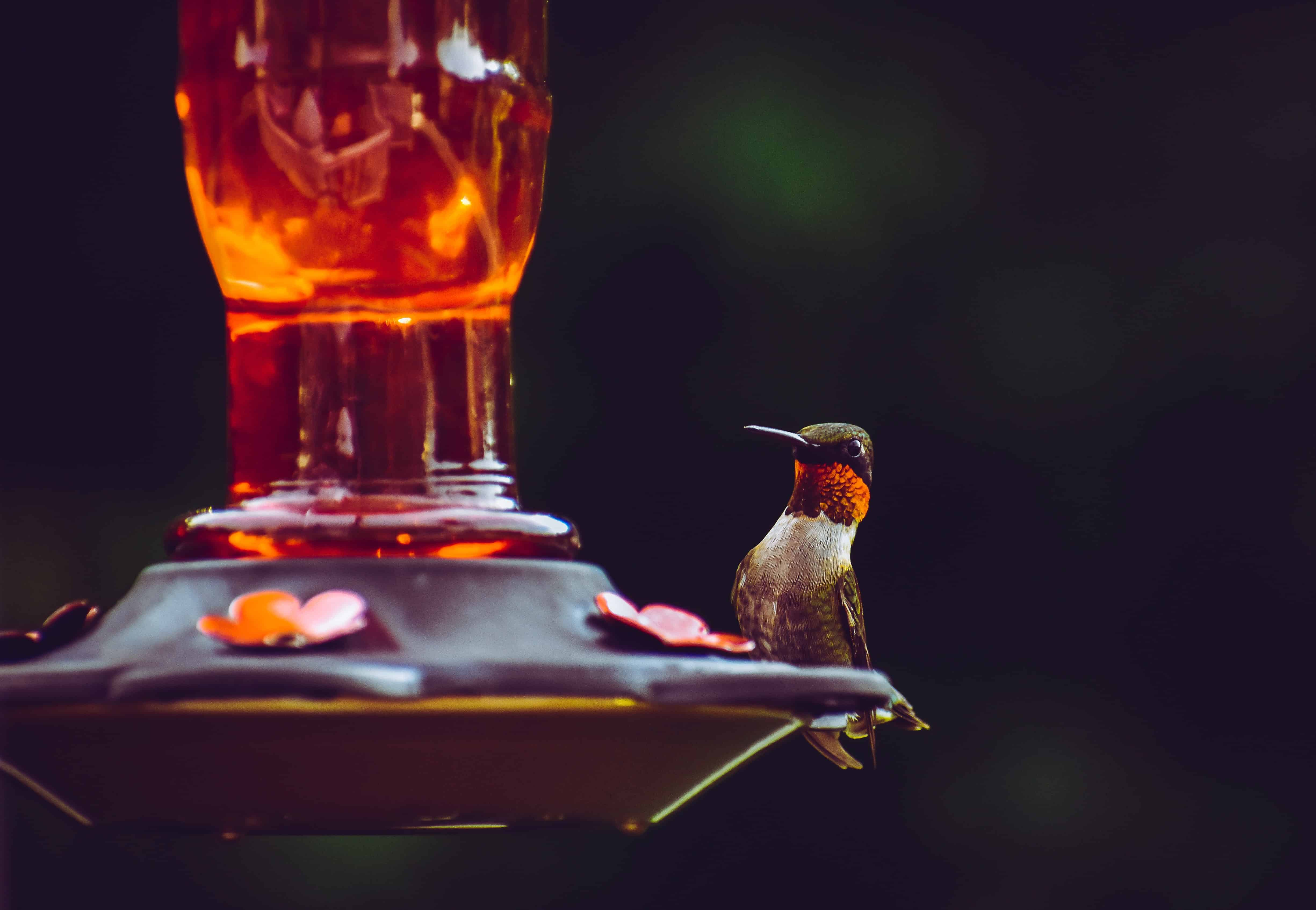 Humming Bird perched on a bird feeder