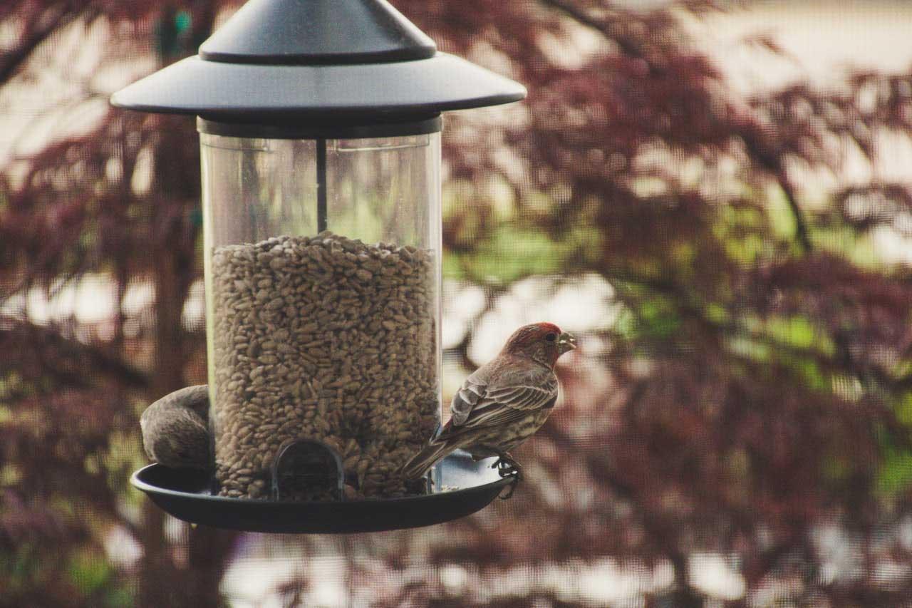 bird seeds and bird