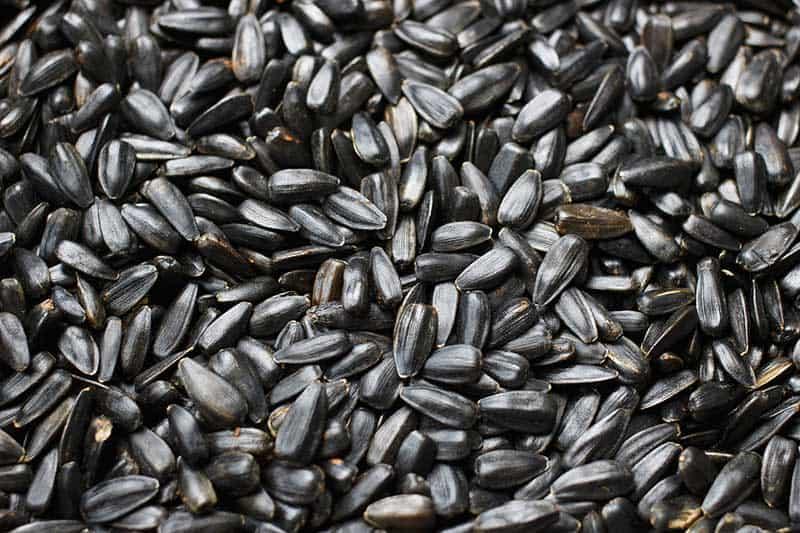 black oiled sunflower seeds