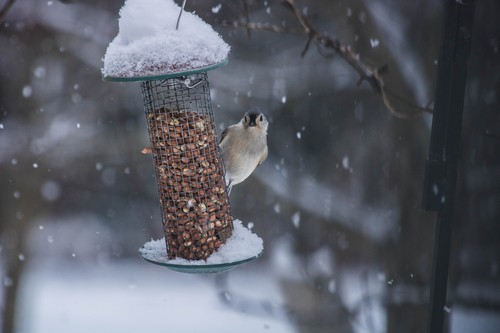 bird on winter
