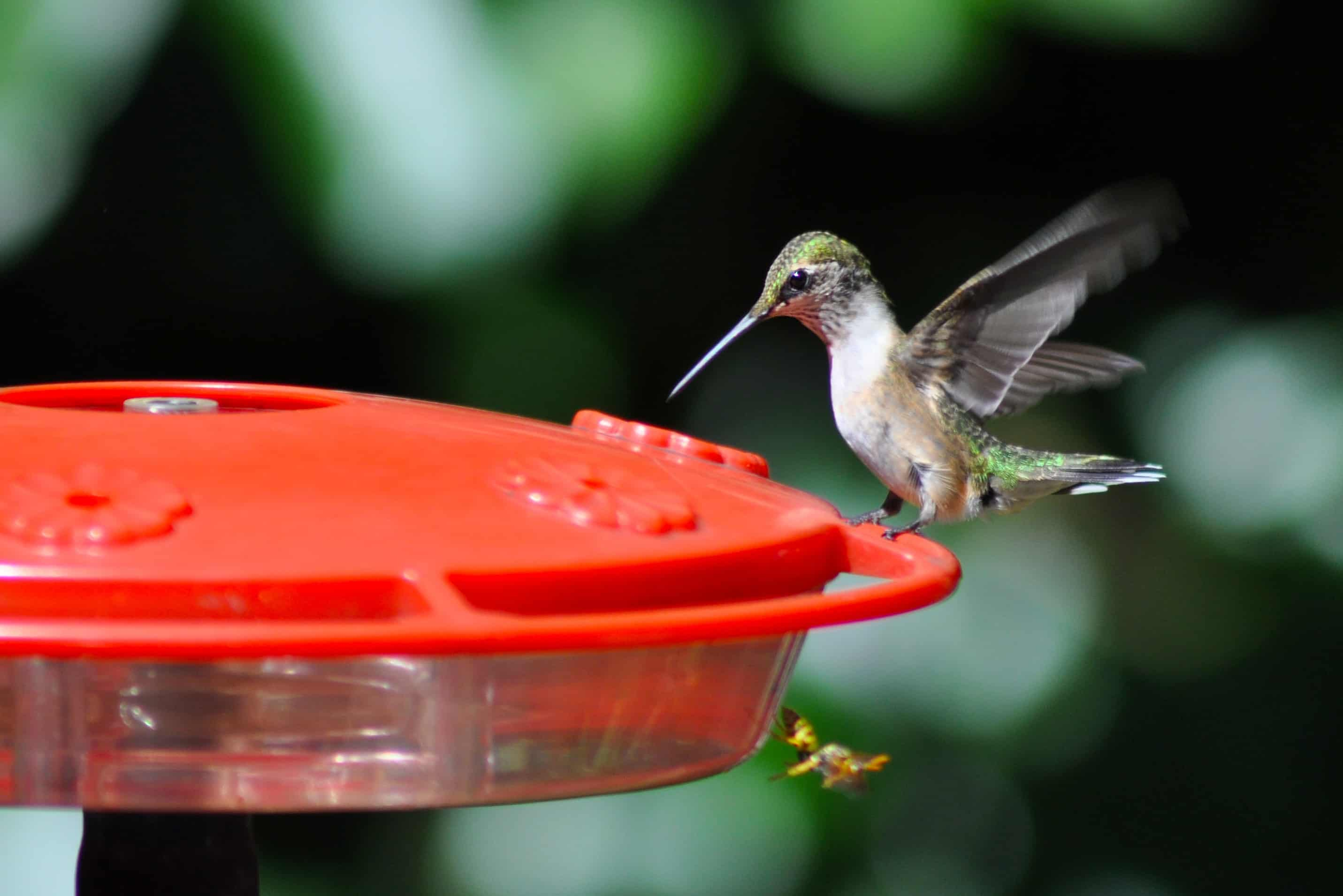 Humming Bird and their feeder