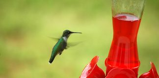 Flying hummingbird is near in its feeder