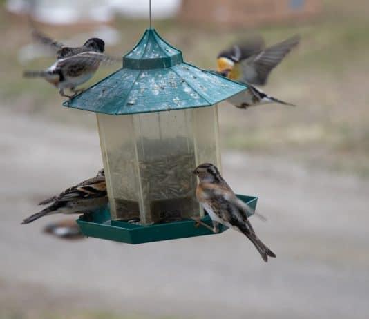 birds flying towards birdfeeder
