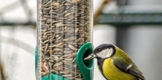 bird and bird seeds
