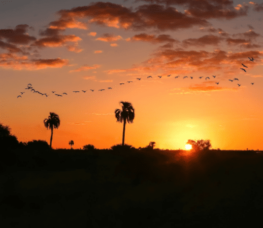 birds formation during sunset