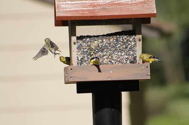 birds feasting on a house birdfeeder